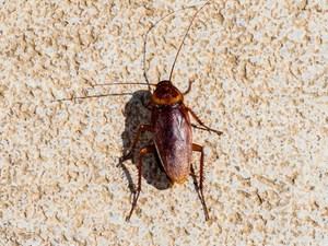 American Cockroach Control Services