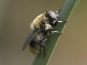 Bumble Bee Pest Exterminators
