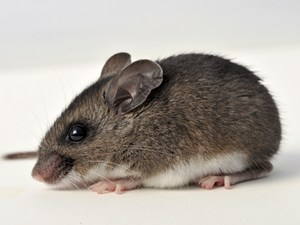 Mouse & Control Service