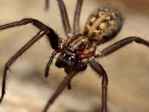 House Spider Control Service