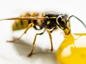 Yellow Jacket Pest Exterminators